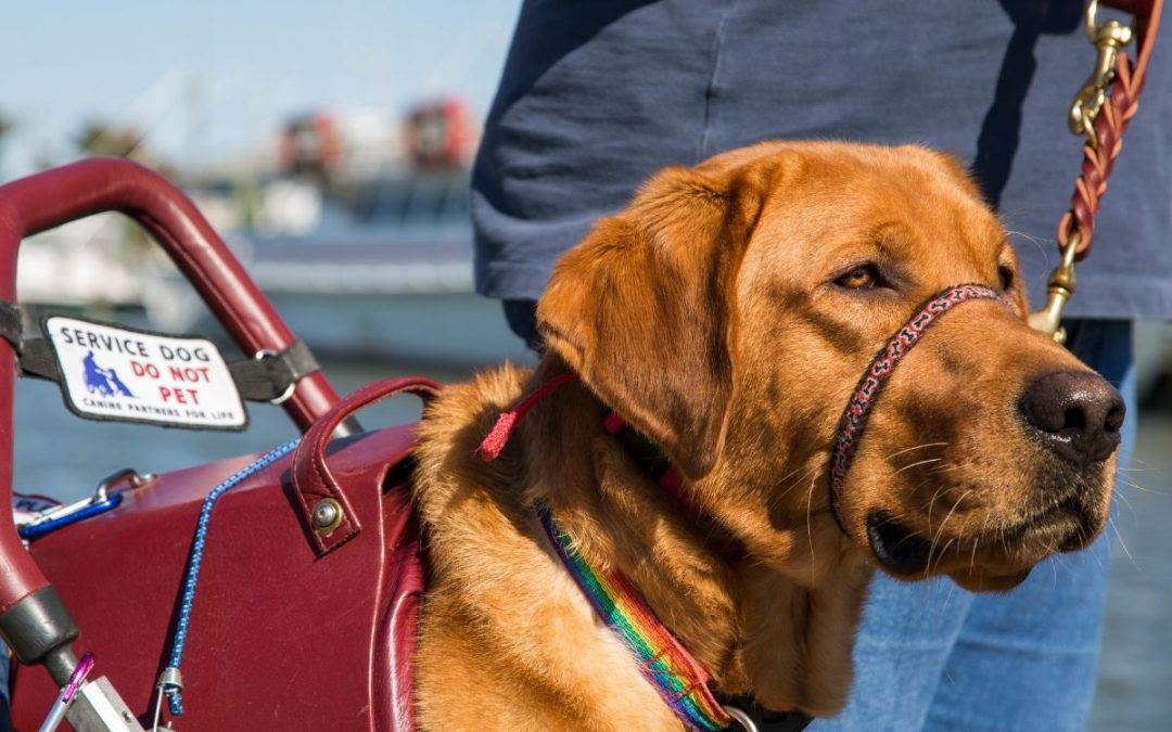 Service dogs and emotional support animals